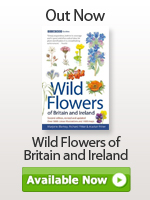 Wild flowers of Britain and Ireland