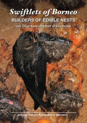 Swiftlets of Borneo