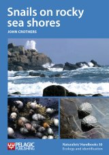 Snails on Rocky Sea Shores