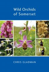 Wild Orchids of Somerset