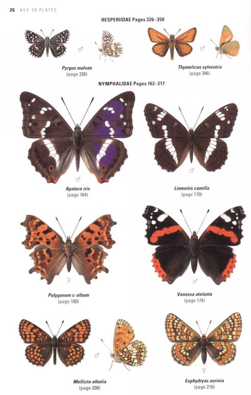 Collins Butterfly Guide: Tom Tolman, Richard Lewington: NHBS - photo#17