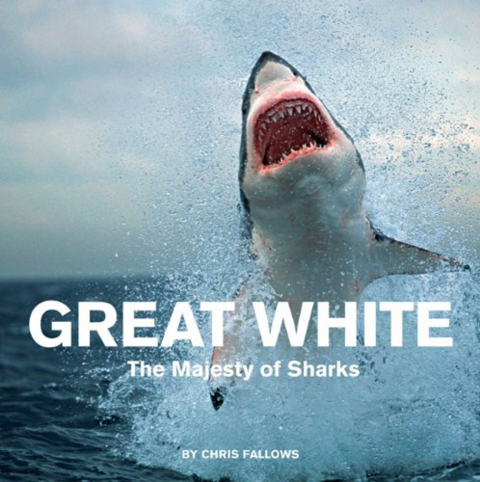 essays on great white sharks Why sharks matter sharks play a vital beachgoers on cape cod may have been channeling benchley in recent weeks, as great white sharks have once again been.