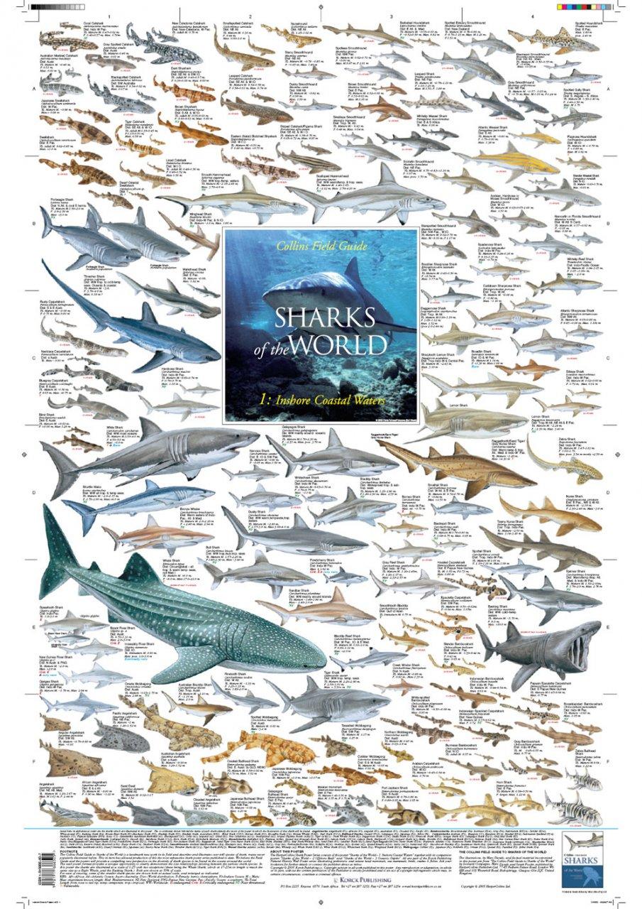 The Natural History Of Sharks