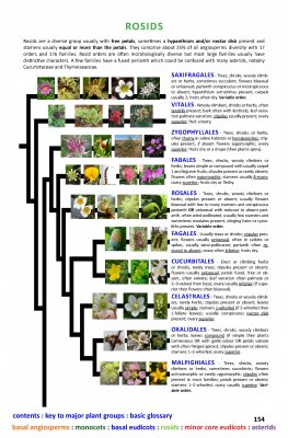 The Flowering Plants Handbook Internal Image