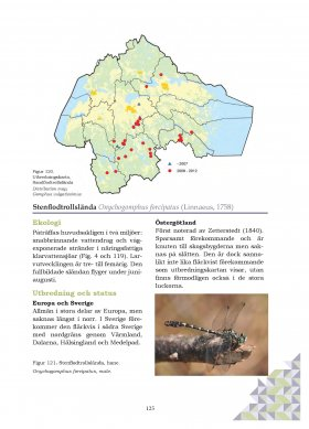 Onychogomphus foripatus description and distribution map from Östergötlands Trollsländor [Dragonflies in Östergötland]