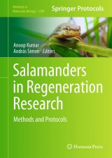 Salamanders in Regeneration Research Image