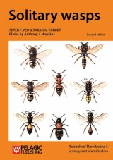 Solitary Wasps Image