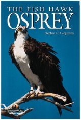 Osprey: The Fish Hawk Image