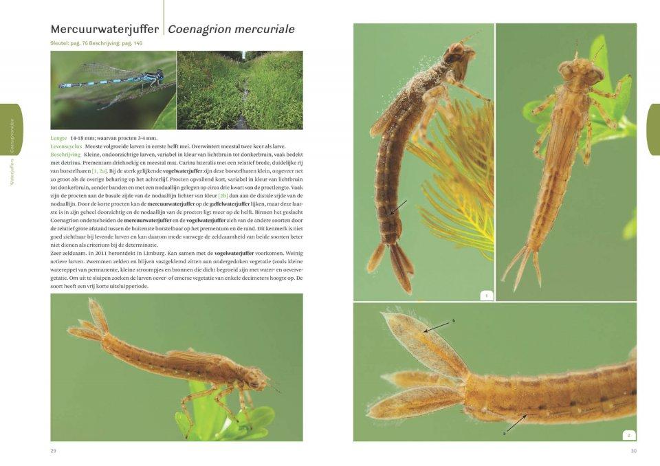 Orders by Taxon: Invertebrate larvae
